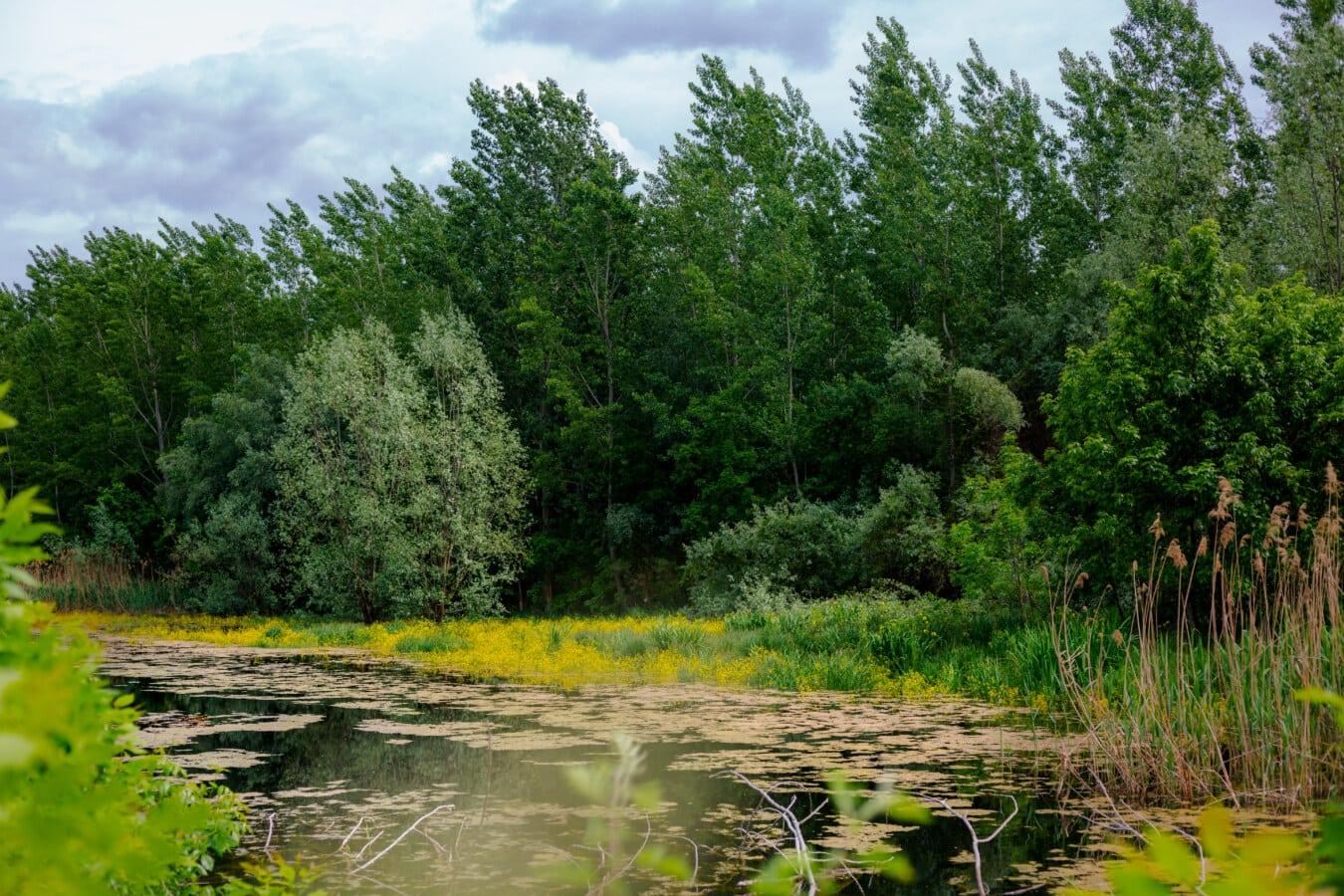 marais, forêt, arbre, Lac, paysage, terrain, plante, nature, bois, eau