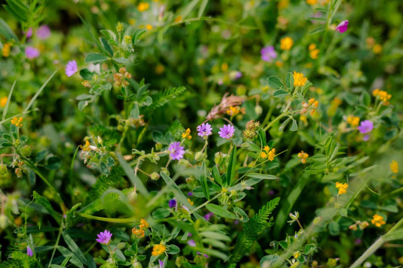 Wildblumen, grasbewachsenen, aus nächster Nähe, Natur, Blume, Feld, Anlage, Blatt, Sommer, Flora