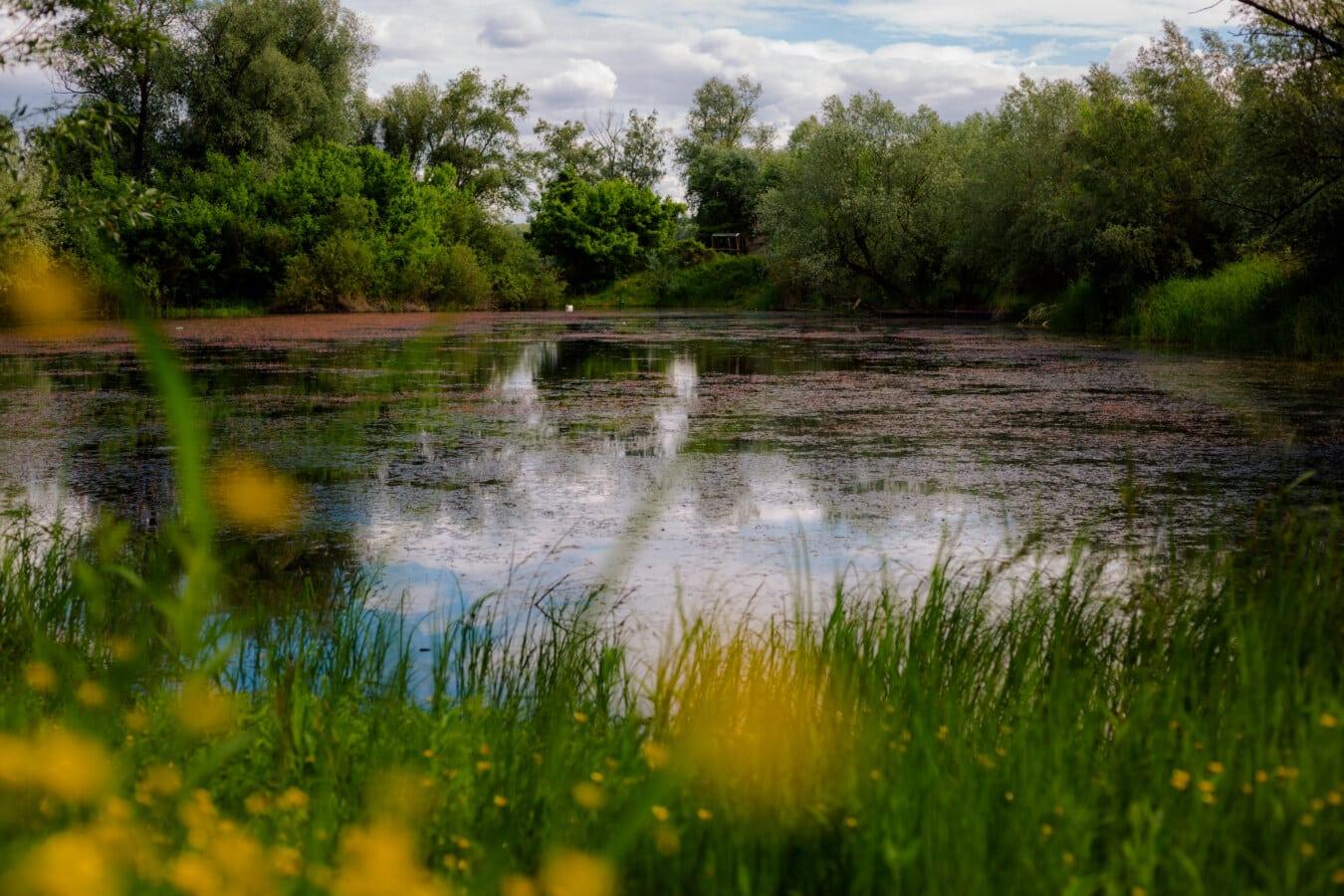 marais, canal, idyllique, plante aquatique, marais, eau, réflexion, paysage, terrain, zones humides
