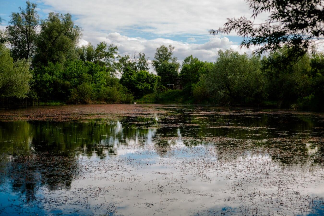 Sumpfgebiet, Sumpf, Atmosphäre, Ruhe, Wasser, Landschaft, See, Struktur, am See, Ufer