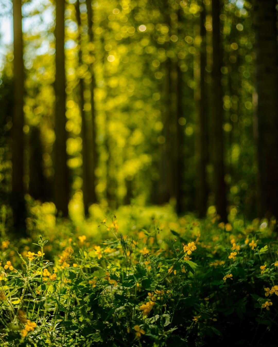 Ökosystem, Wald, Ökologie, Sonnenlicht, Sonnenschein, Holz, Anlage, Dämmerung, Kraut, Sonne