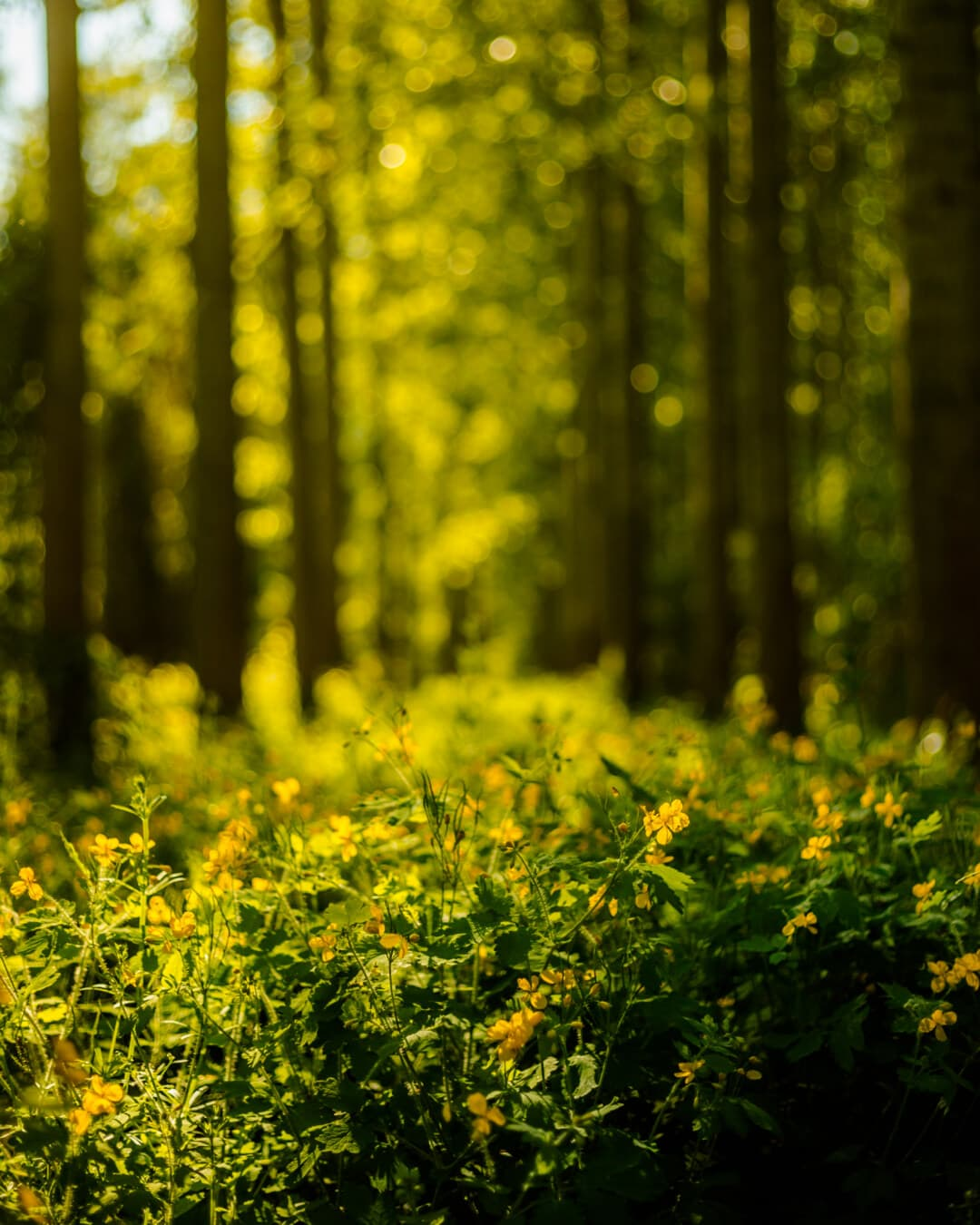 sunny, forest, sunlight, sunrays, trees, grass, wood, landscape, field, herb