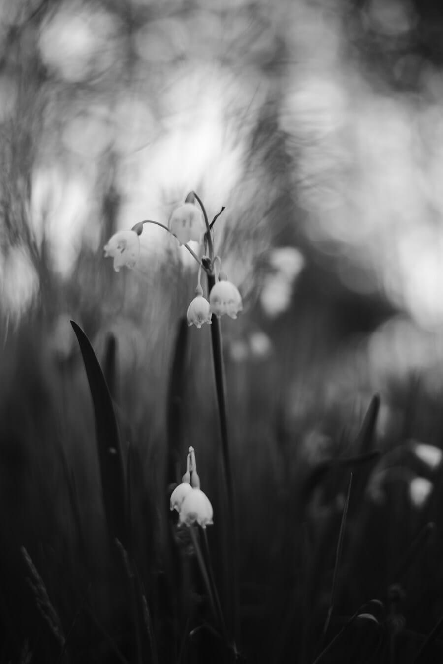monochrome, white flower, spring time, black and white, grassy, flower, plant, nature, grass, leaf
