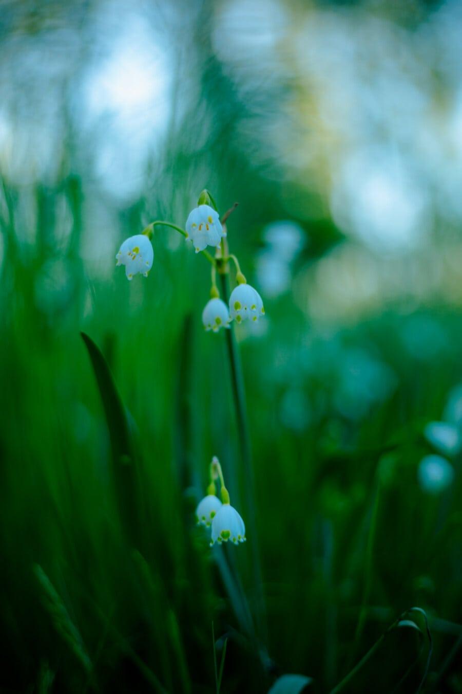 fleur blanche, printemps beauté, printemps, printemps, soleil, jardin, nature, plante, fleur, herbe