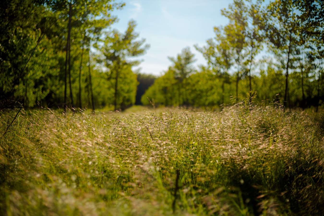 grass, high, grassy, forest, landscape, plant, tree, nature, leaf, fair weather
