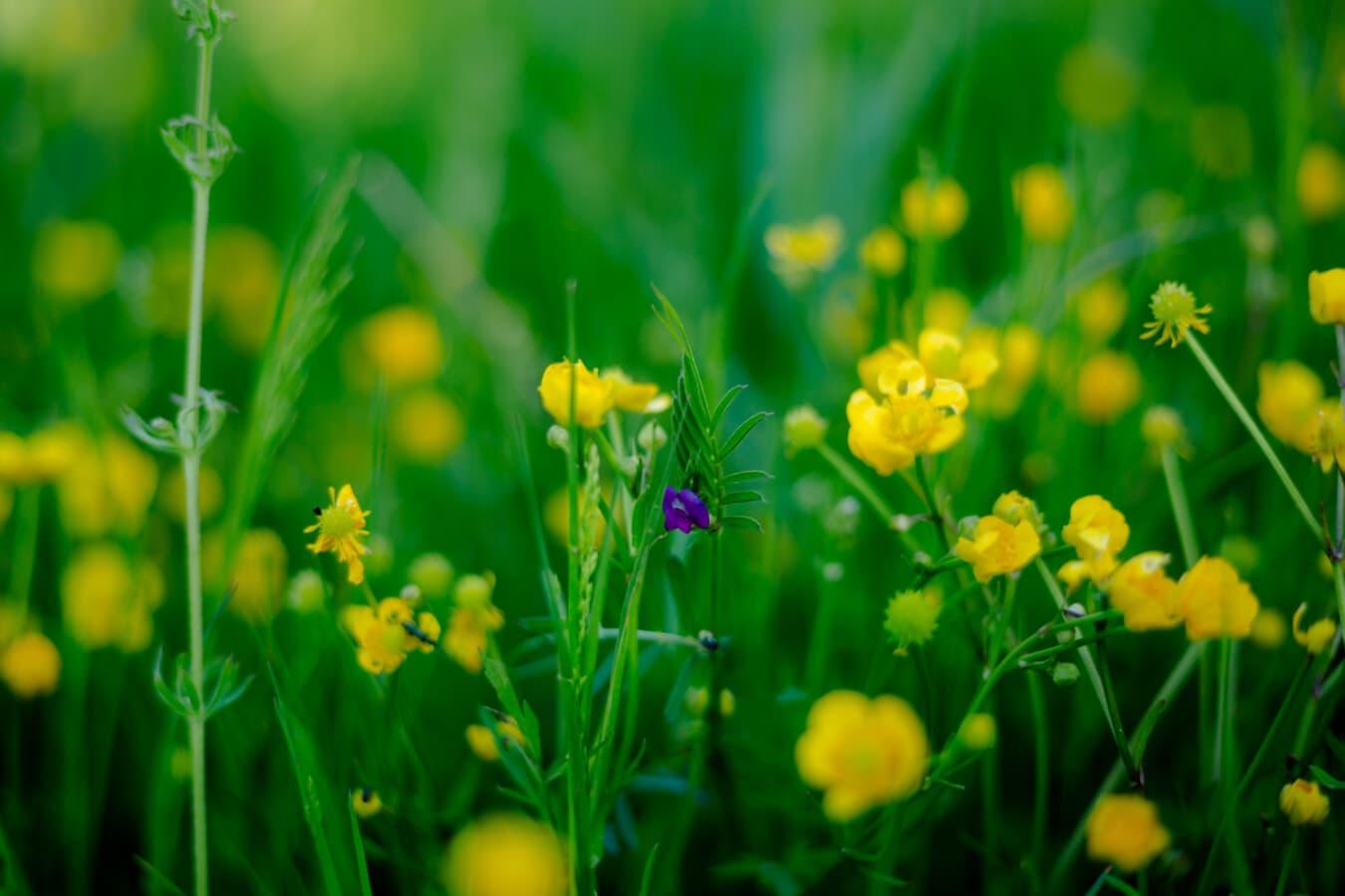 Gras, Wildblumen, aus nächster Nähe, des ländlichen Raums, Sommer, Natur, Feld, Blatt, Blume, Flora