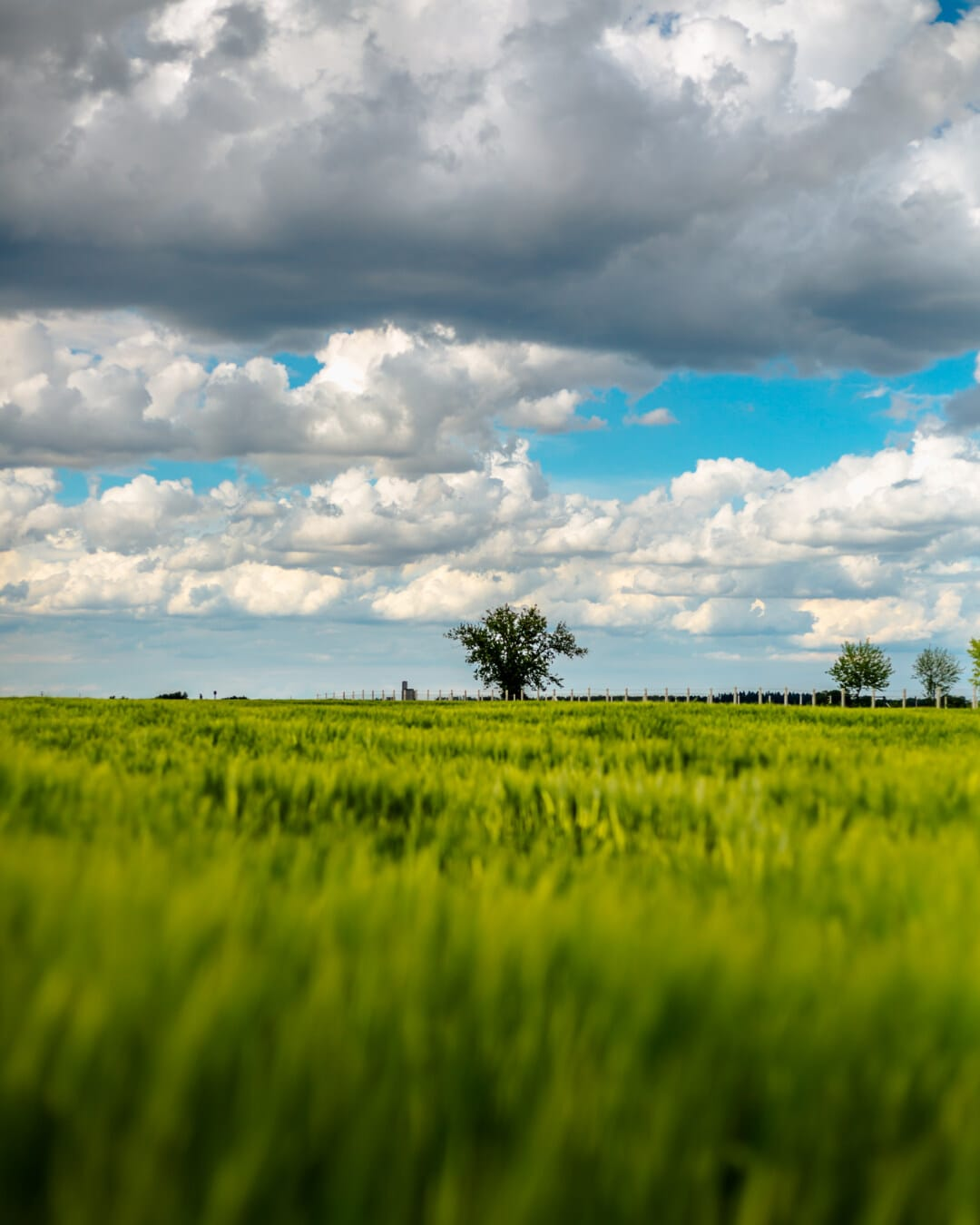 domaine, nature, Agriculture, champ de blé, paysage, rural, soleil, les terres agricoles, blé, herbe