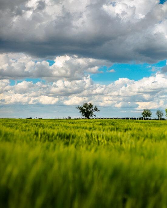 Feld, Natur, Landwirtschaft, Weizenfeld, Landschaft, des ländlichen Raums, Sonne, Ackerland, Weizen, Gras