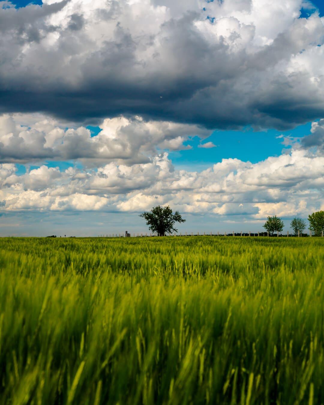 bewölkt, Weizenfeld, Feld, Landwirtschaft, Ackerland, Bauernhof, Weizen, Landschaft, Gras, Korn