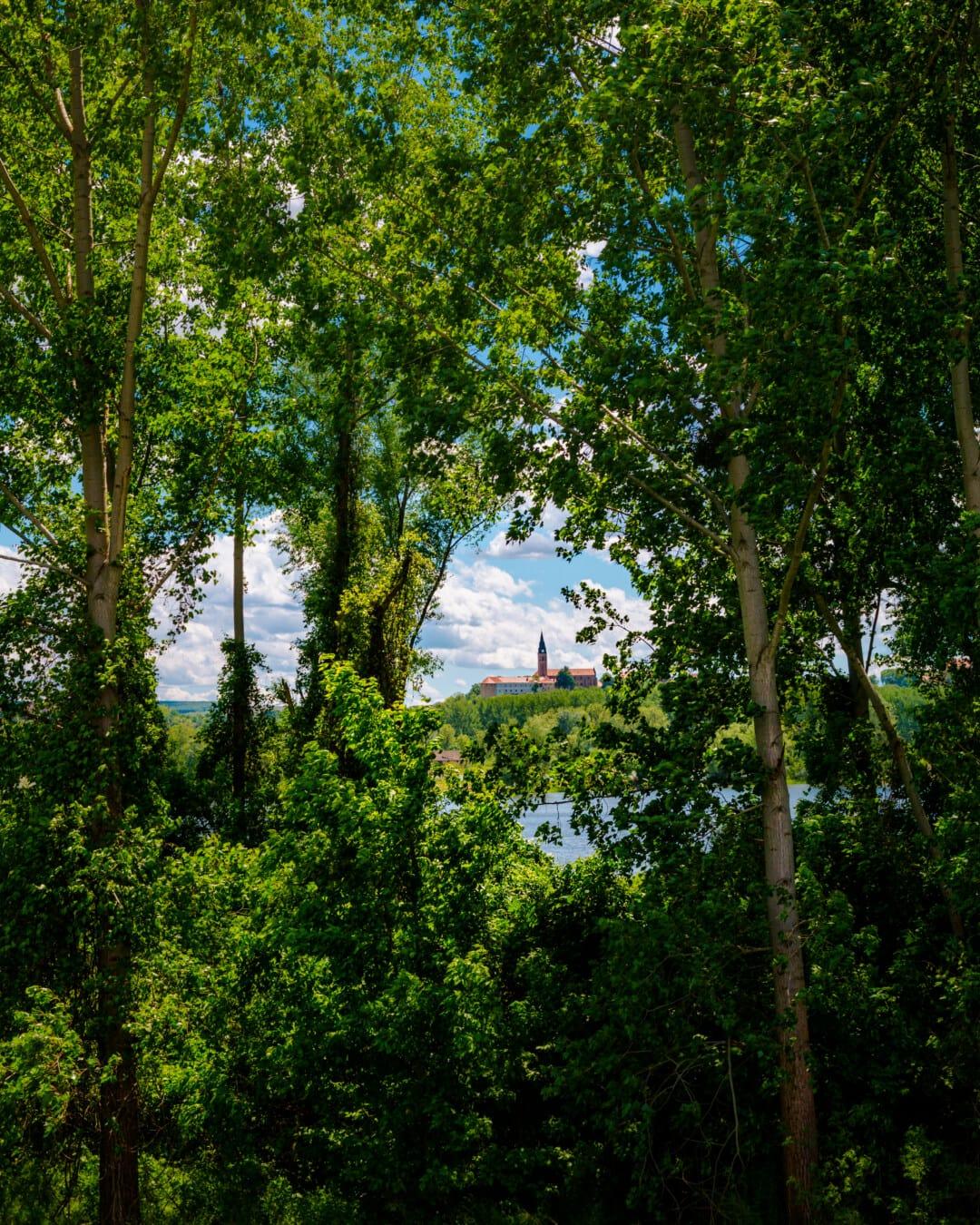 숲, 거리, 관점, 교회 탑, 나무, 트리, 풍경, 공장, 자연, 잎