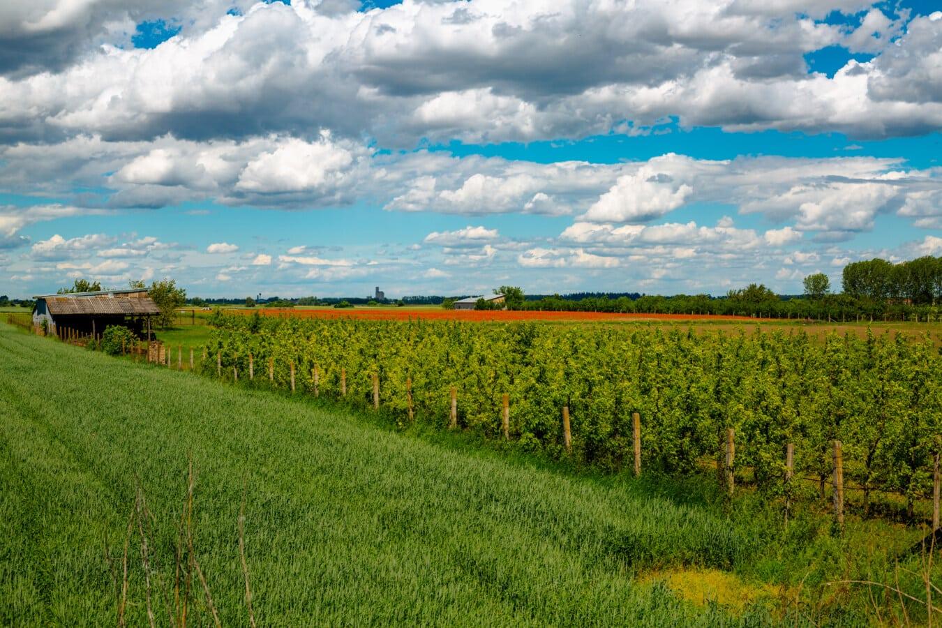 pšeničné polia, pole, poľnohospodárstvo, prístrešok, ovocný sad, statok, poľnohospodárska pôda, tráva, repka olejná, farma