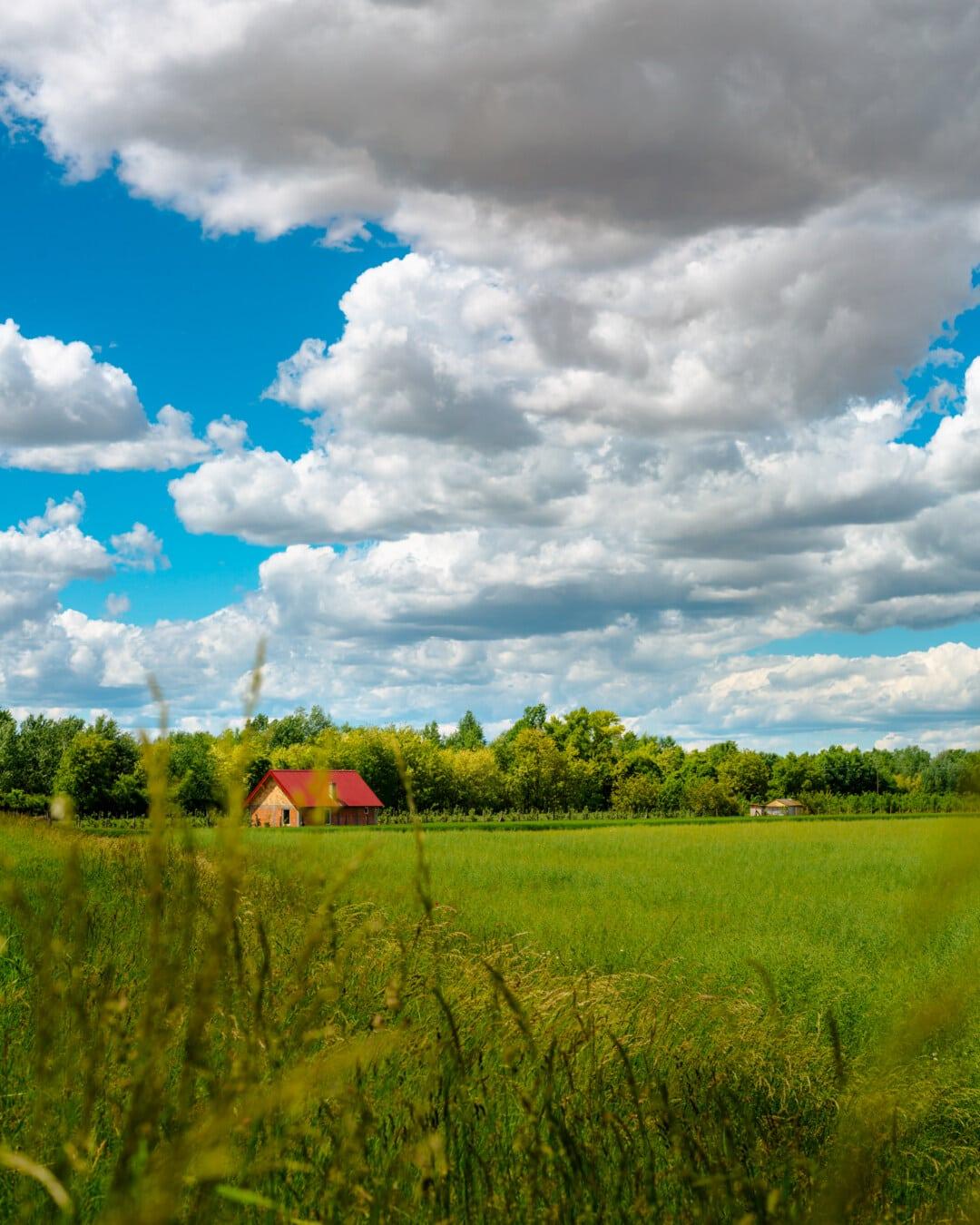 farm, farmhouse, farmland, cloudy, idyllic, spring time, wheatfield, cloud, atmosphere, meadow