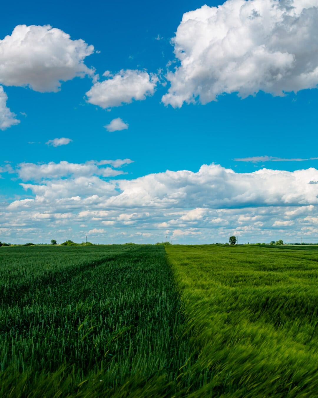 Weizenfeld, Ackerland, Roggen, Schönwetter, Frühling, idyllisch, Wolken, Wiese, Wolke, des ländlichen Raums