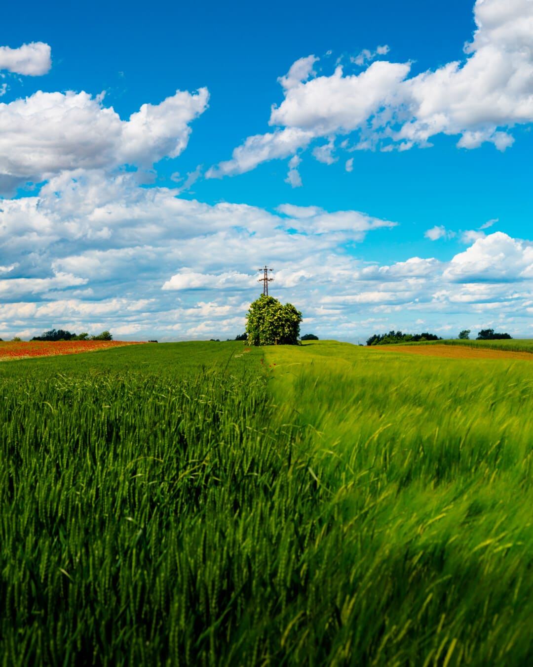champ de blé, domaine, seigle, heure d'été, blé, nuage, grain, prairie, paysage, herbe