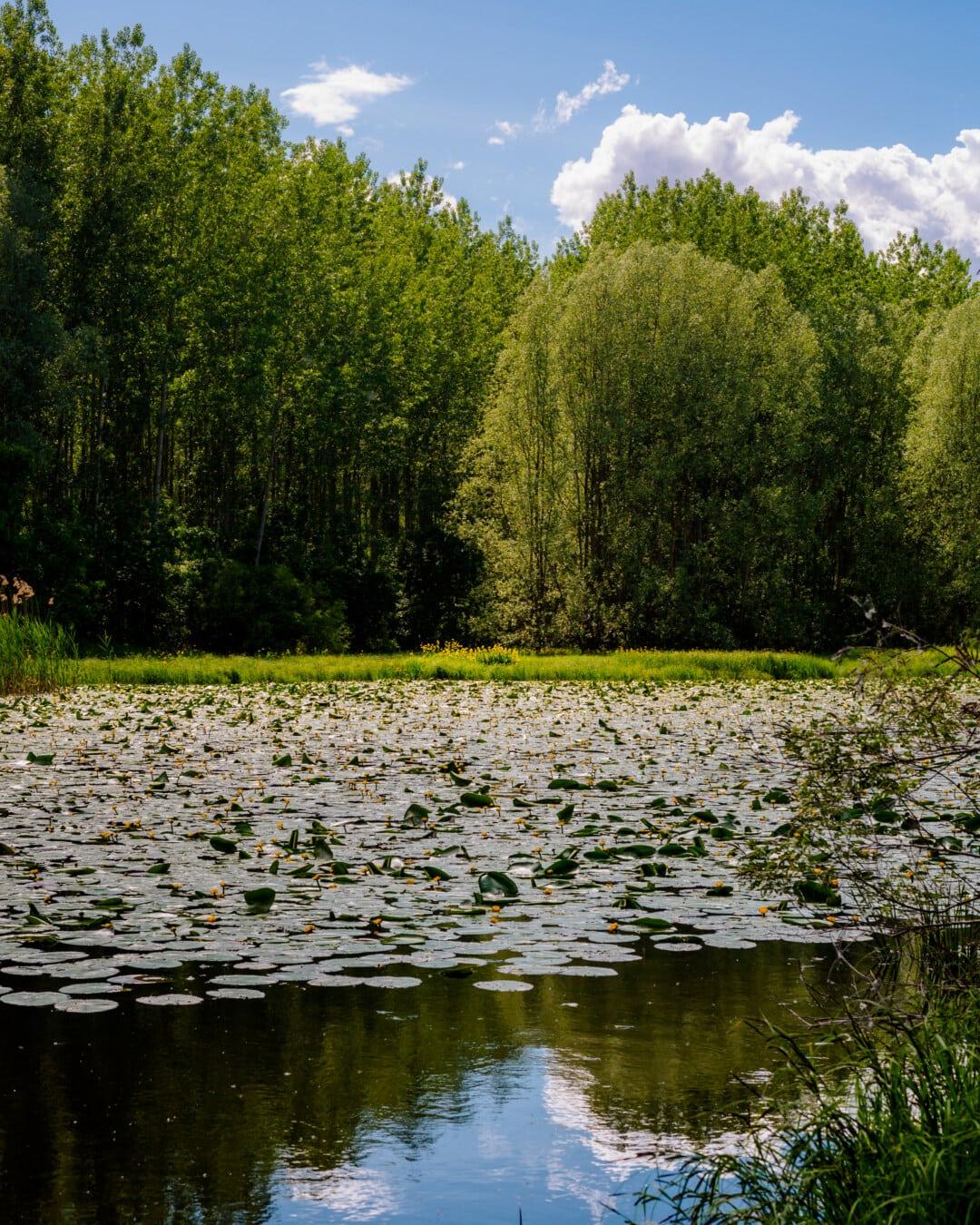 늪지대, 자연 서식 지, 수련, 수생 식물, 수생, 생태계, 풍경, 물, 호수, 토지