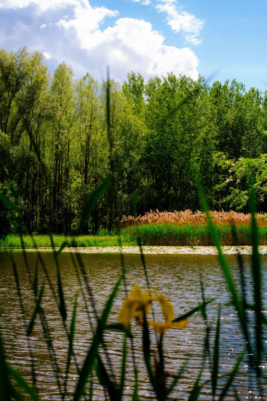 mlaştină, timp de primăvară, mlaştini, copaci, apa, mlastina, copac, zori de zi, pădure, peisaj