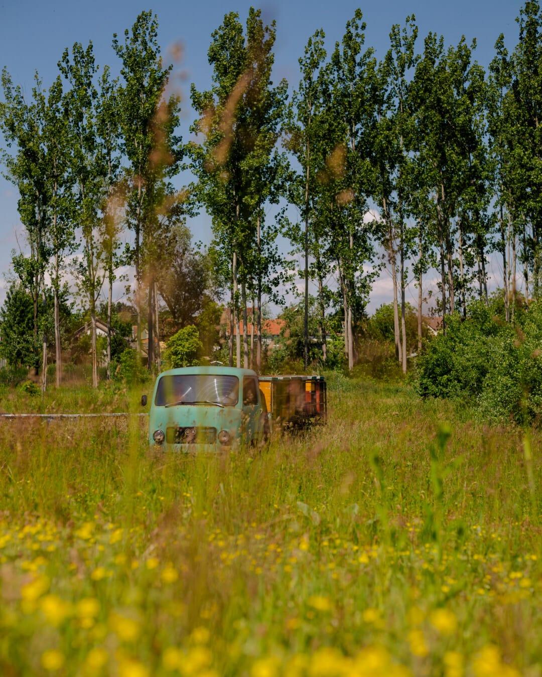 Bienenstock, LKW, des ländlichen Raums, Struktur, Fahrzeug, Gras, Natur, Landschaft, Holz, im freien
