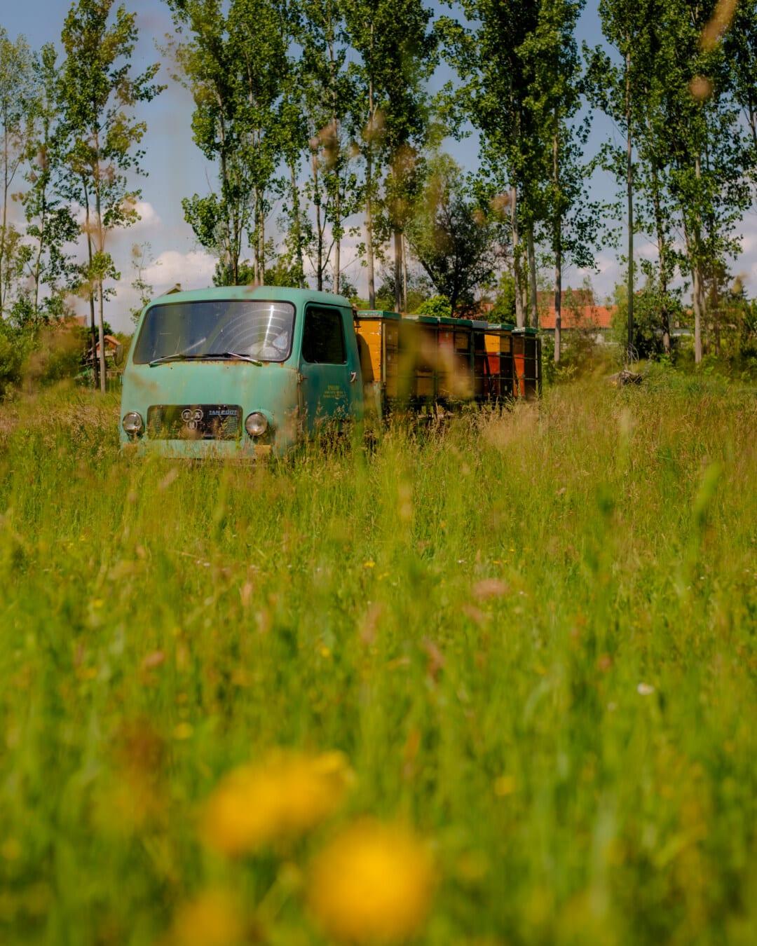 camion, style ancien, ruche, transport, herbeux, rural, véhicule, paysage, herbe, été