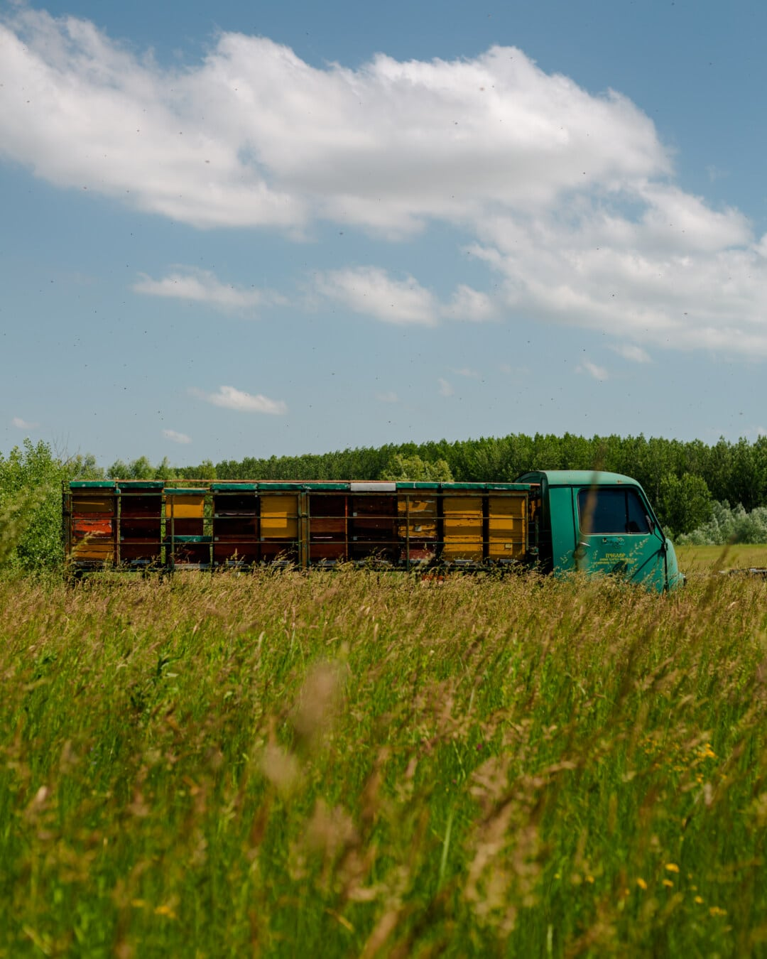 LKW, Bienenstock, Feld, landwirtschaftlich, Fahrzeug, des ländlichen Raums, Sommer, Gras, Natur, Biene