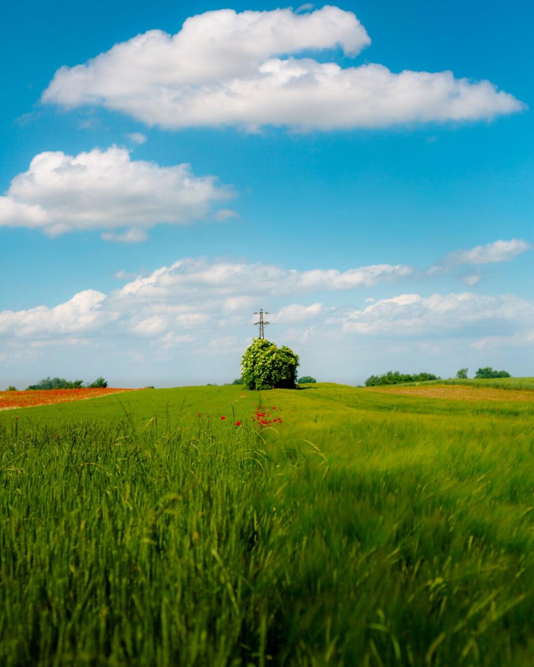 Weizenfeld, idyllisch, Perspektive, Roggen, des ländlichen Raums, Wiese, Feld, Getreide, Landschaft, Weizen
