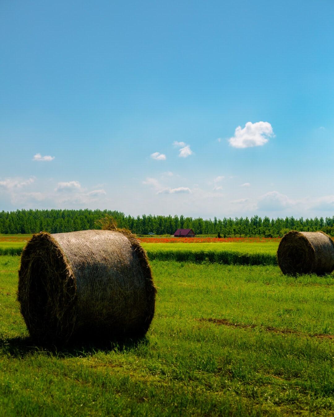 sena, kola, zemědělská usedlost, zemědělská půda, farma, seno pole, seno, pole, tráva, zemědělství