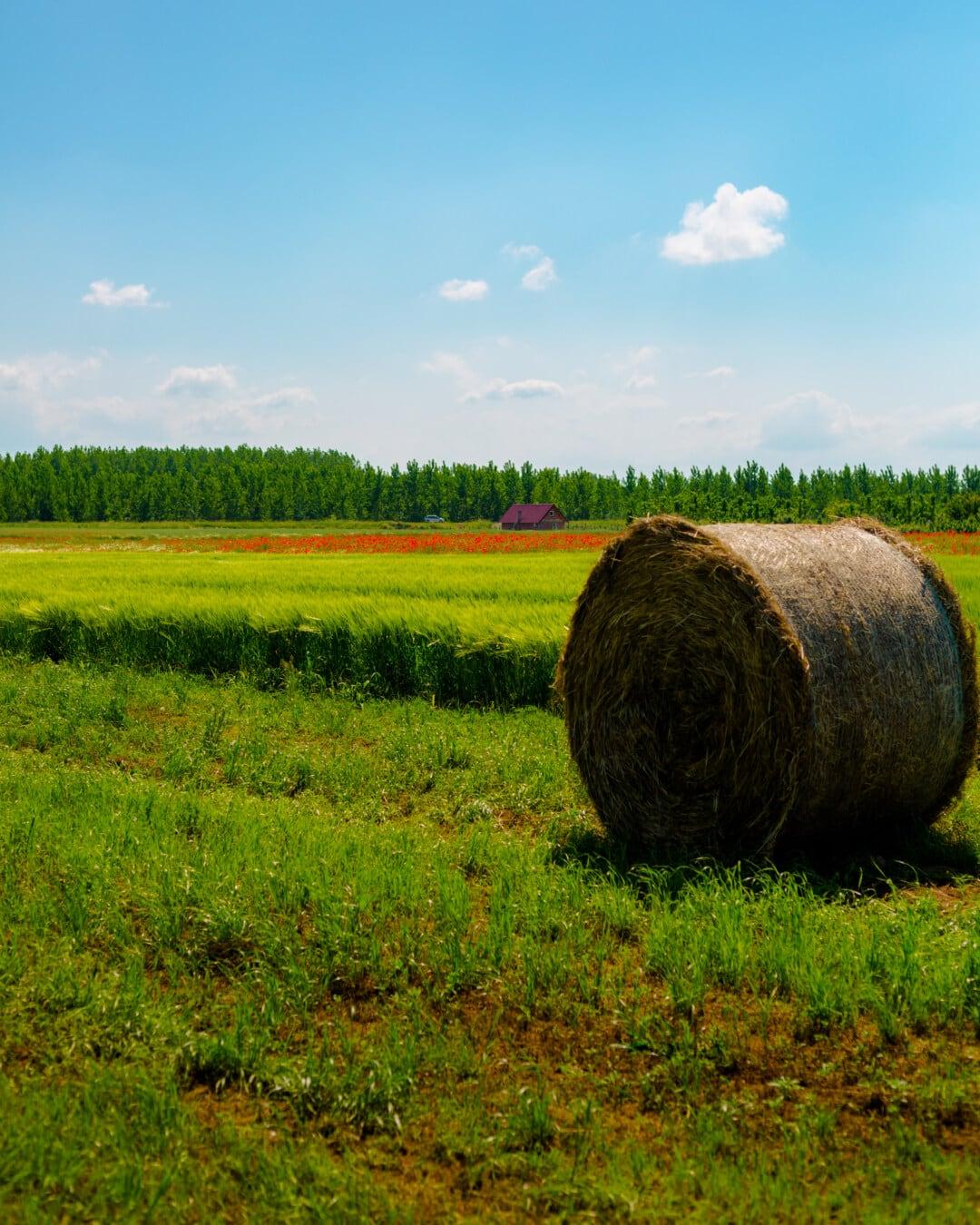 seno, sena, seno pole, sláma, jídlo, venkova, sklizeň, krajina, pole, informační kanál