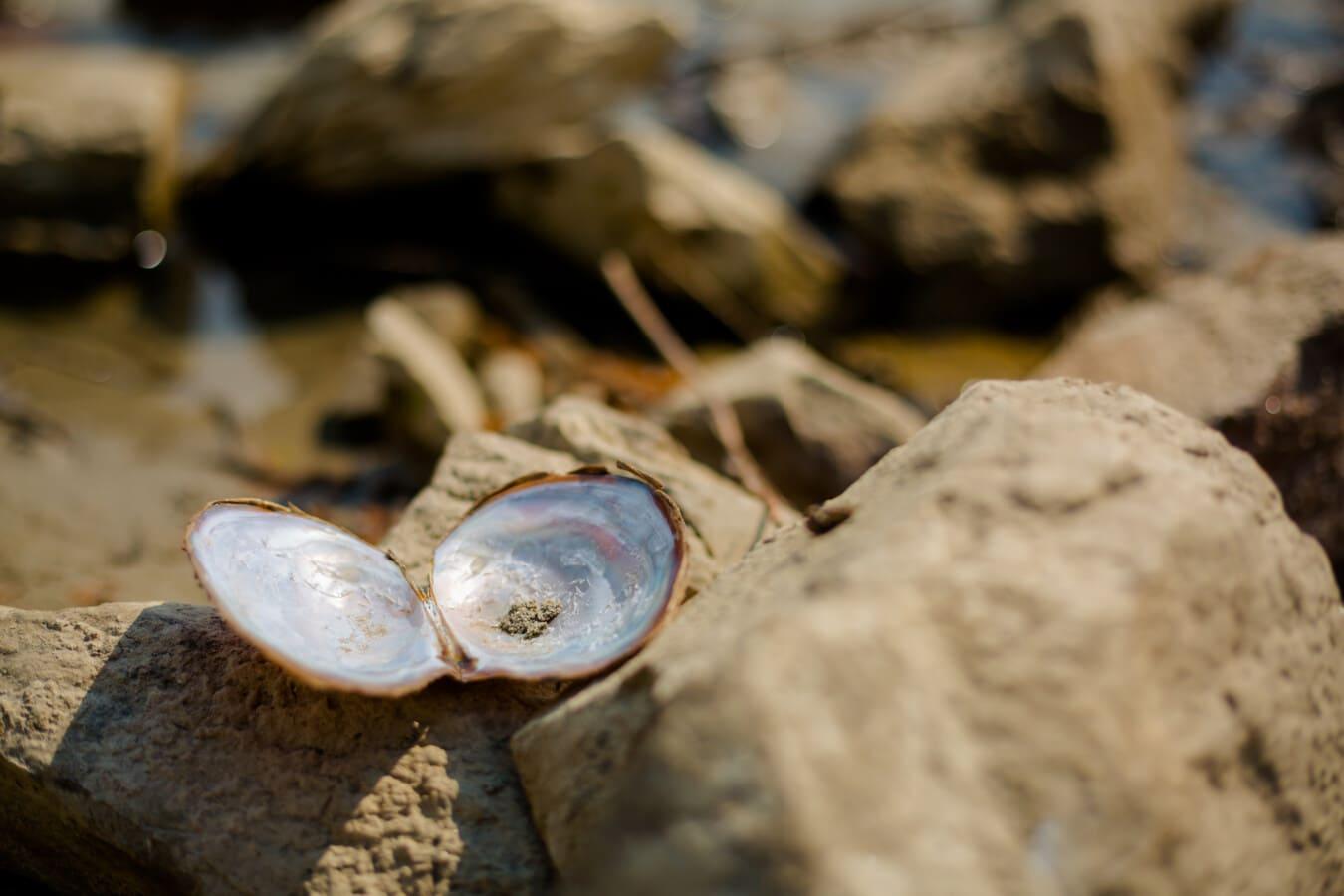 Coquille, mollusque, Zen, belle photo, nature, plage, sable, à l'extérieur, Roche, eau
