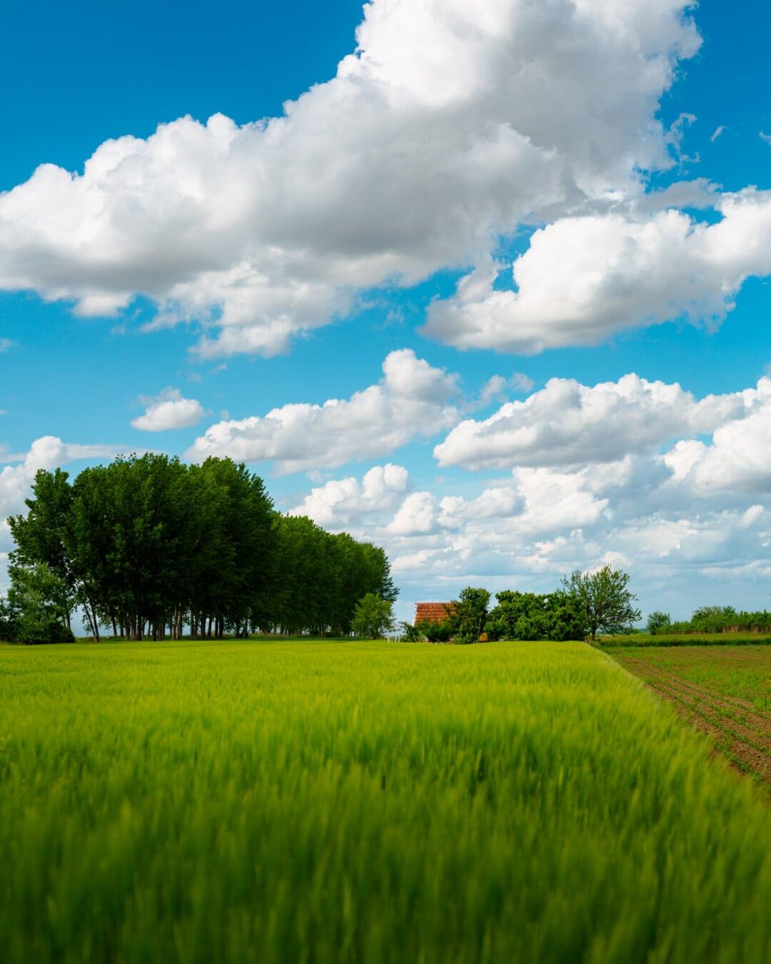 jordbruksområder, Wheatfield, våningshus, gården, våren, landskapet, feltet, vår, atmosfære, skyen