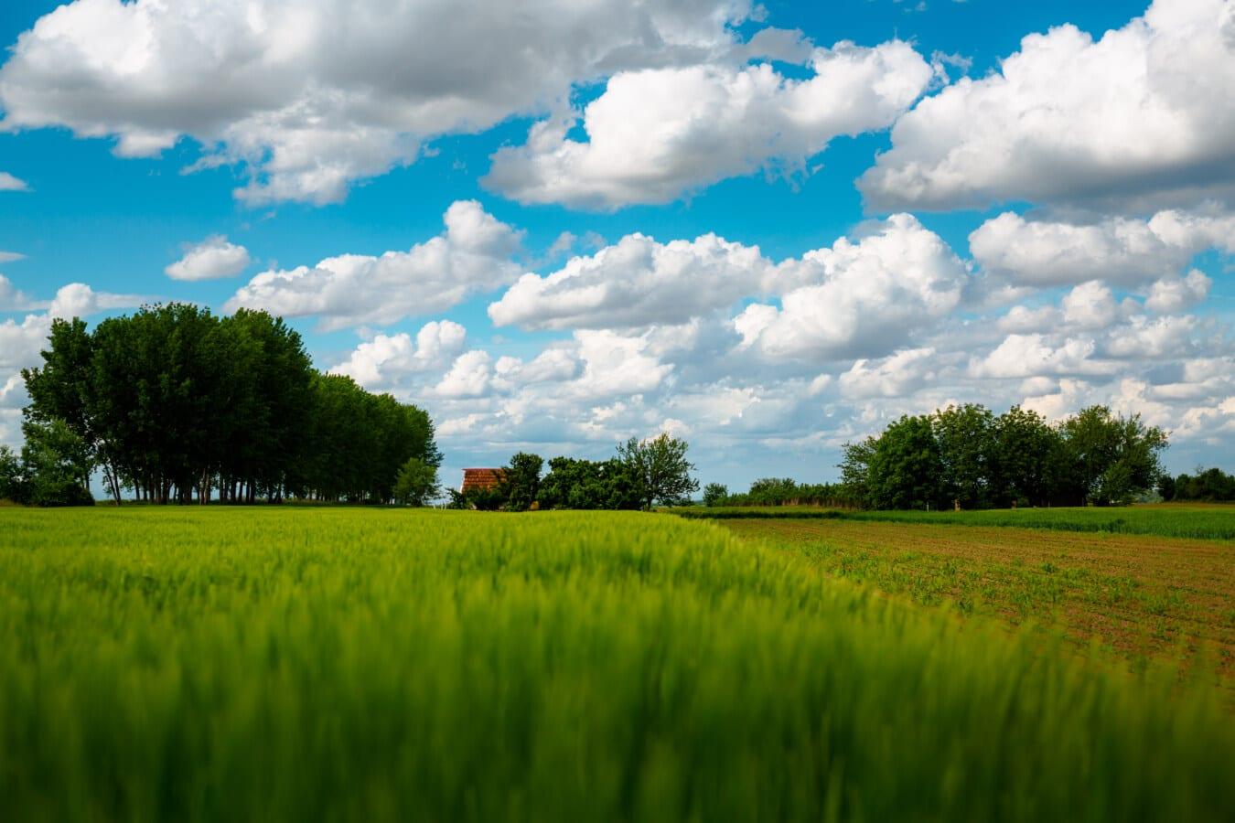 Ackerland, Bauernhof, Weizenfeld, idyllisch, Atmosphäre, Feld, Gras, Landwirtschaft, des ländlichen Raums, Wiese