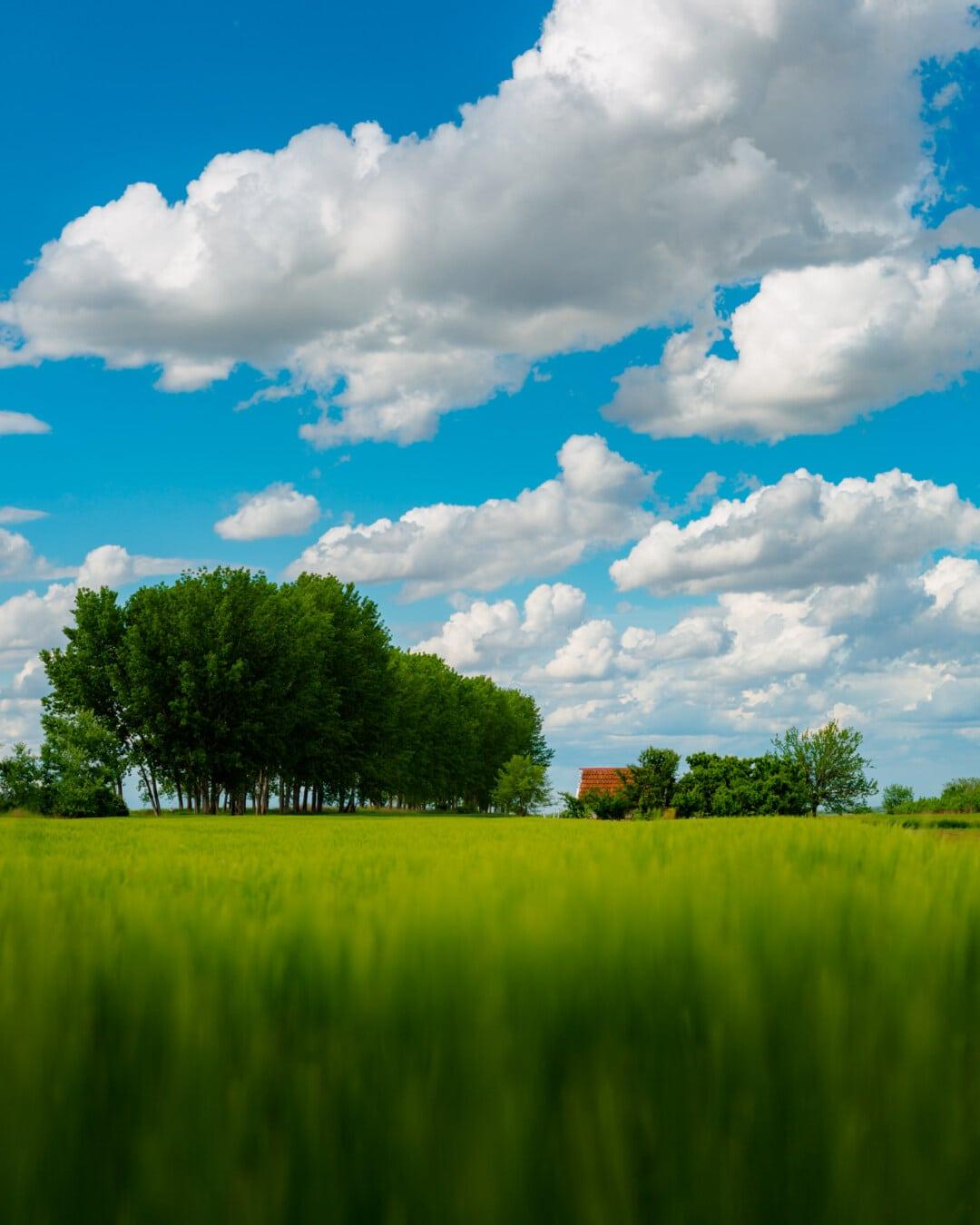 printemps, champ de blé, les terres agricoles, ferme, Cottage, été, domaine, ferme, herbe, prairie