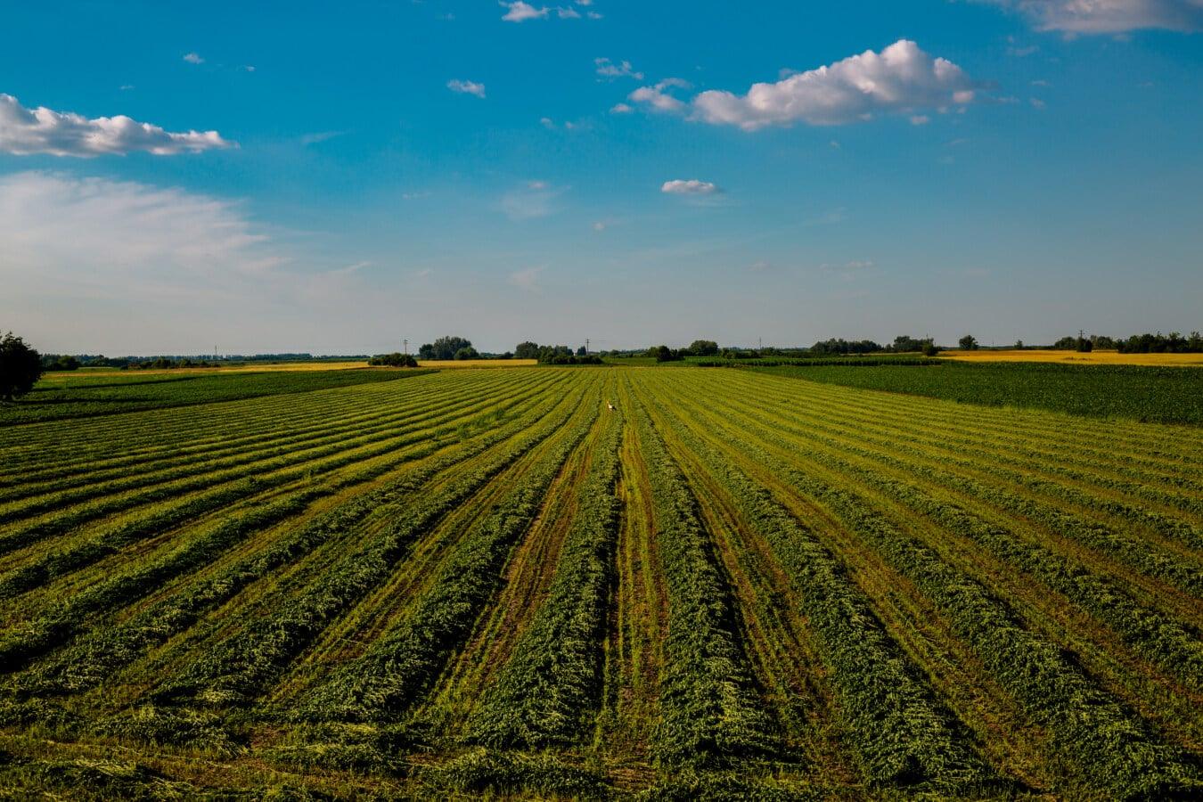농업, 잔디 식물, 토지, 농장, 풍경, 농촌, 잔디, 필드, 초원, 밀