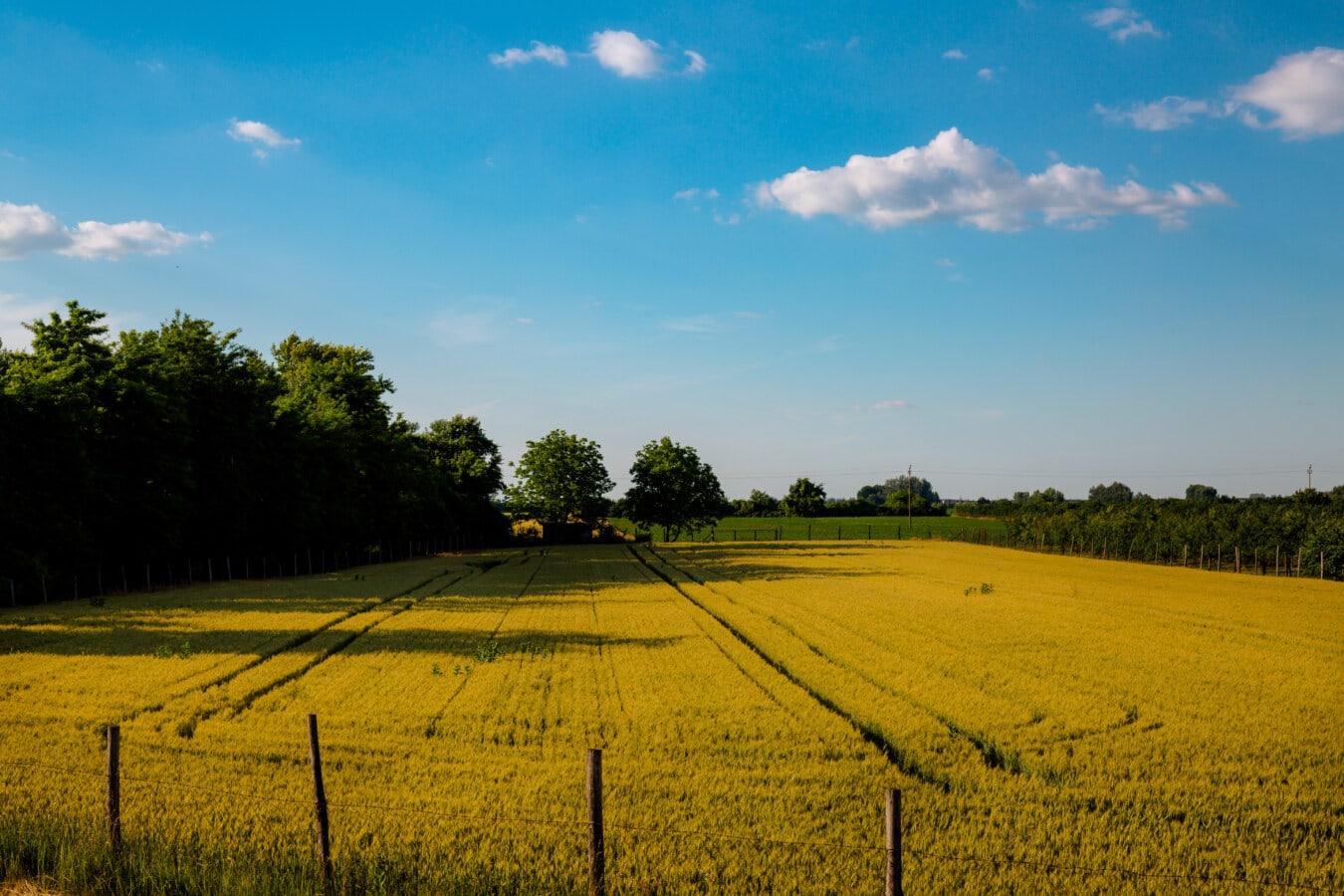 alan, Wheatfield, Tarım, çit, kırsal, manzara, yaz, Güneş, doğa, kırsal