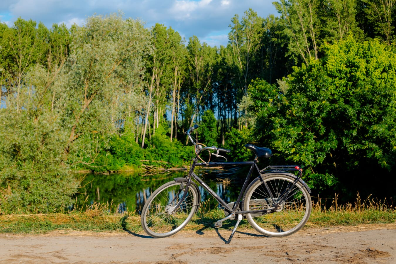 rural, road, bicycle, lakeside, forest, tree, cyclist, wheel, nature, summer