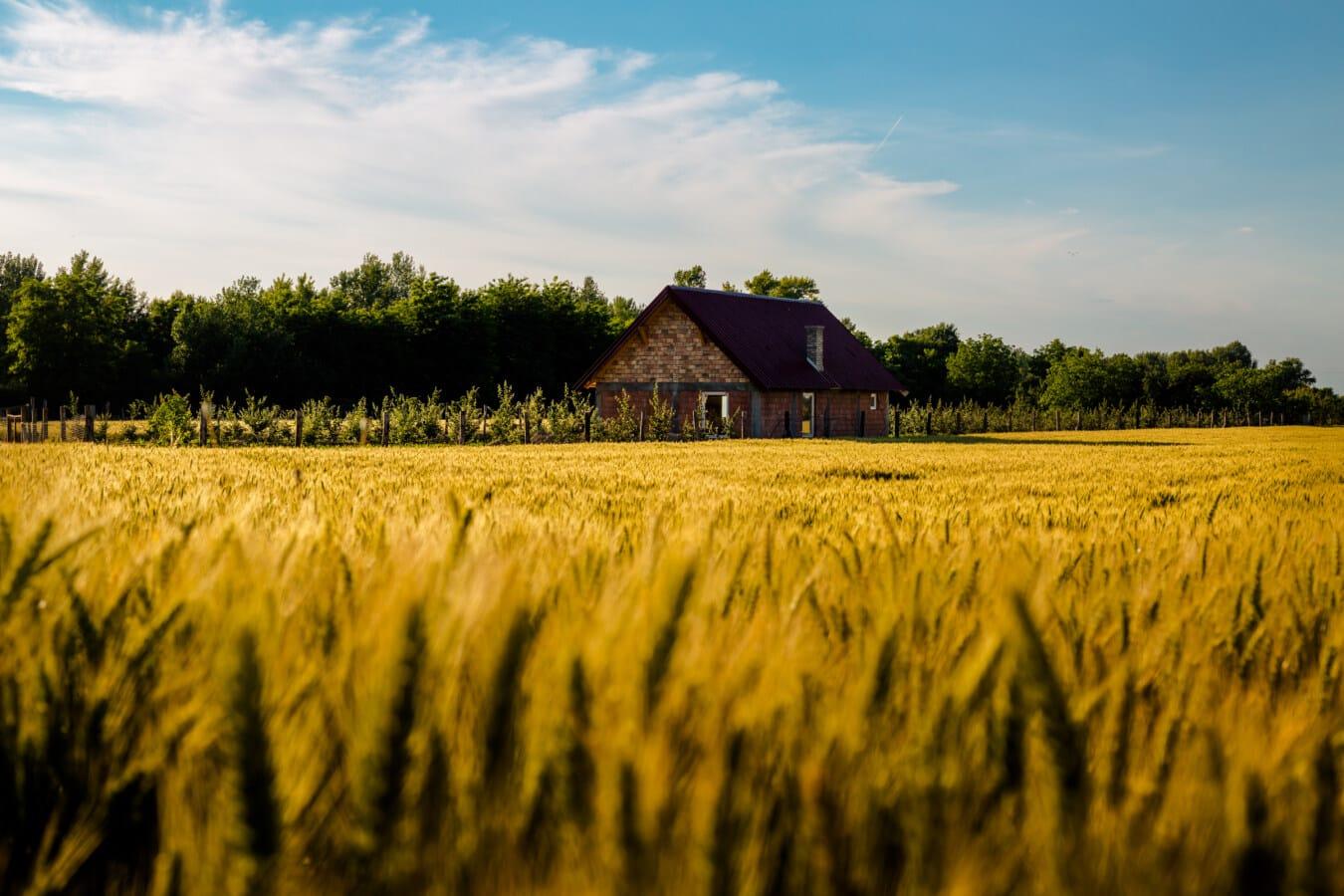 landbouwgrond, boerderij, boerderij, landbouw, landbouw, Korenveld, idyllische, landschap, majestueus, platteland