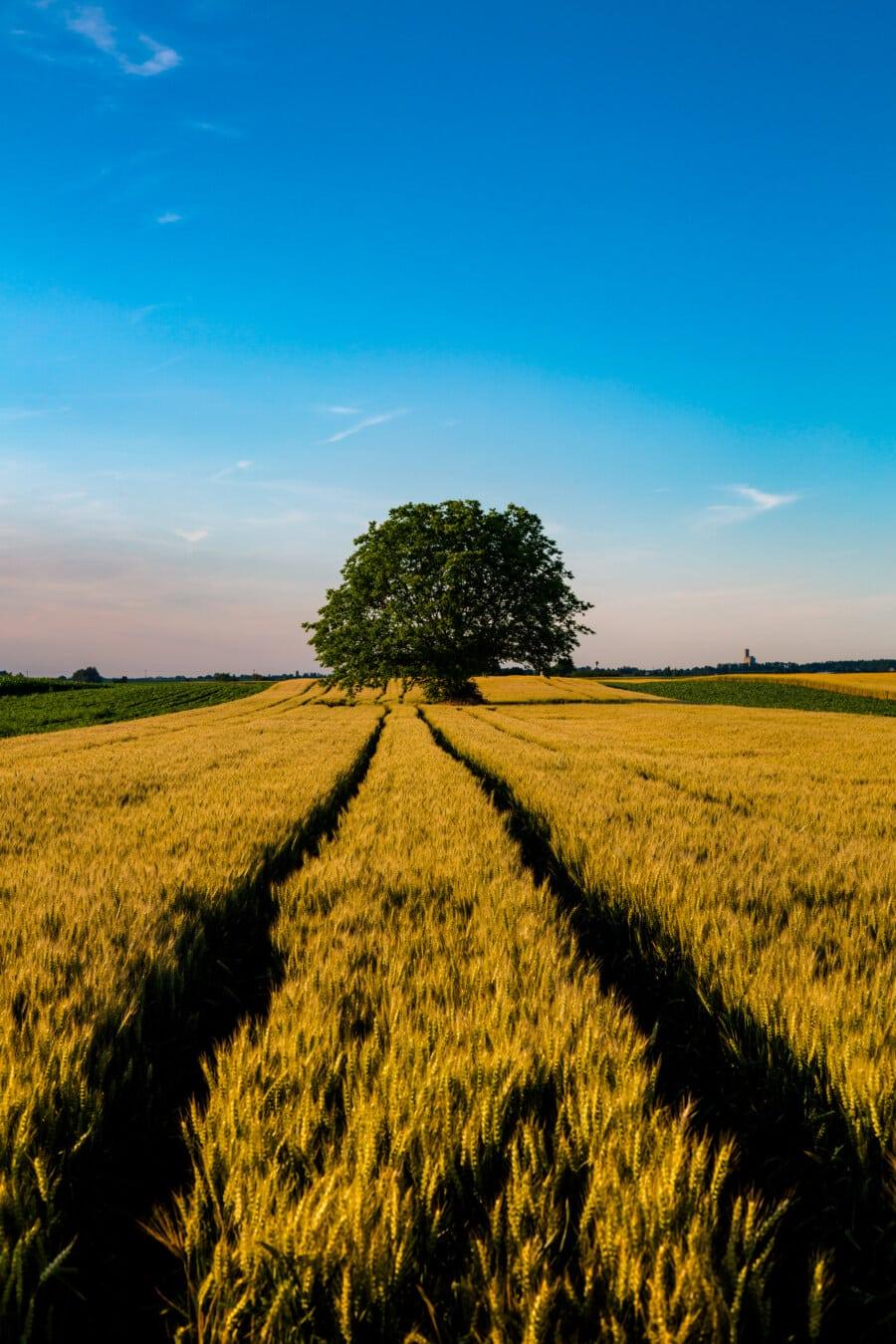 dag, solrig, felt, landbrugs, Hvedemarken, træ, landbrug, gård, landdistrikter, landskab