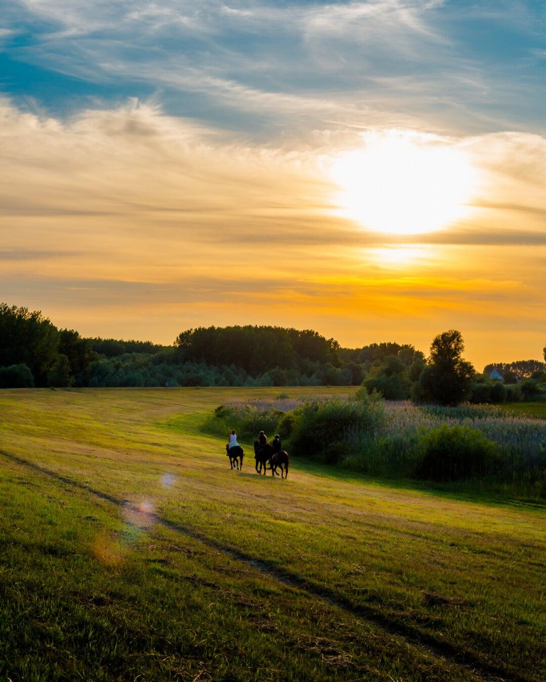 rider, horses, training program, atmosphere, majestic, sunset, dawn, rural, landscape, farmland