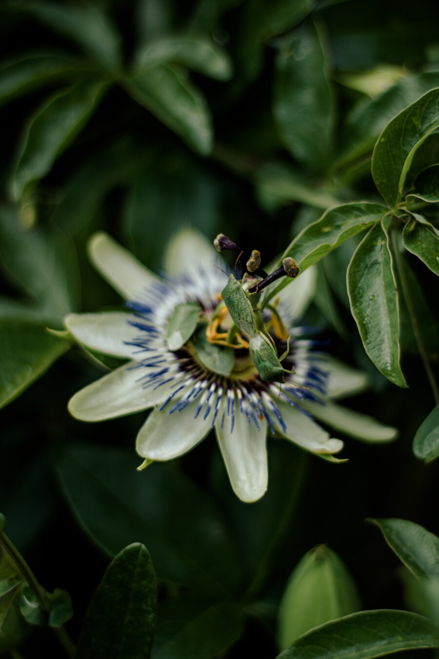 Grün, Käfer, Insekt, Fehler, tropische, exotisch, Blume, Blatt, gelb, Natur