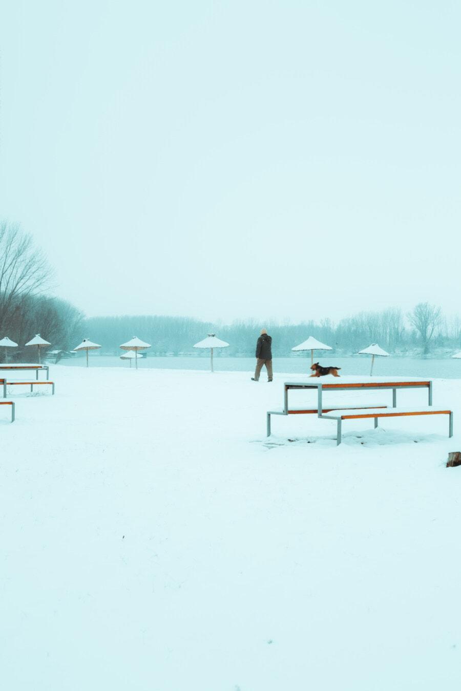 snowy, winter, man, beach, walking, running, dog, water, cold, snow