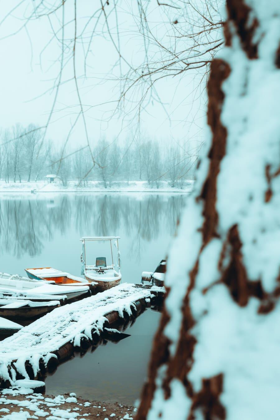 neigeux, Hiver, port, Lac, au bord du lac, bateau à moteur, arbre, branches, neige, barrage