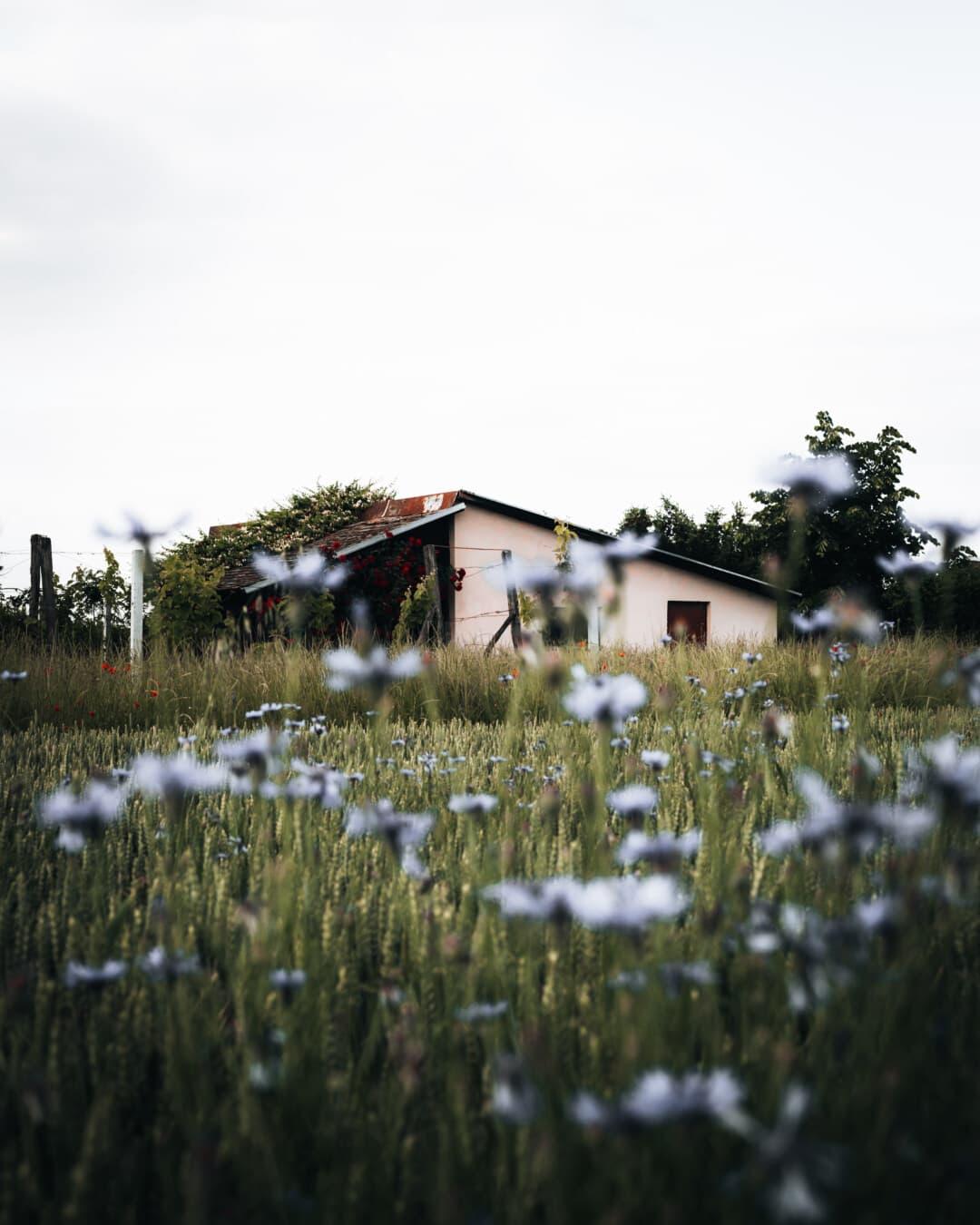 บ้านไร่, เก่า, ฟาร์ม, ถูกทอดทิ้ง, ภูมิทัศน์, กิจกรรมกลางแจ้ง, ธรรมชาติ, ดอกไม้, ฤดูร้อน, หญ้า