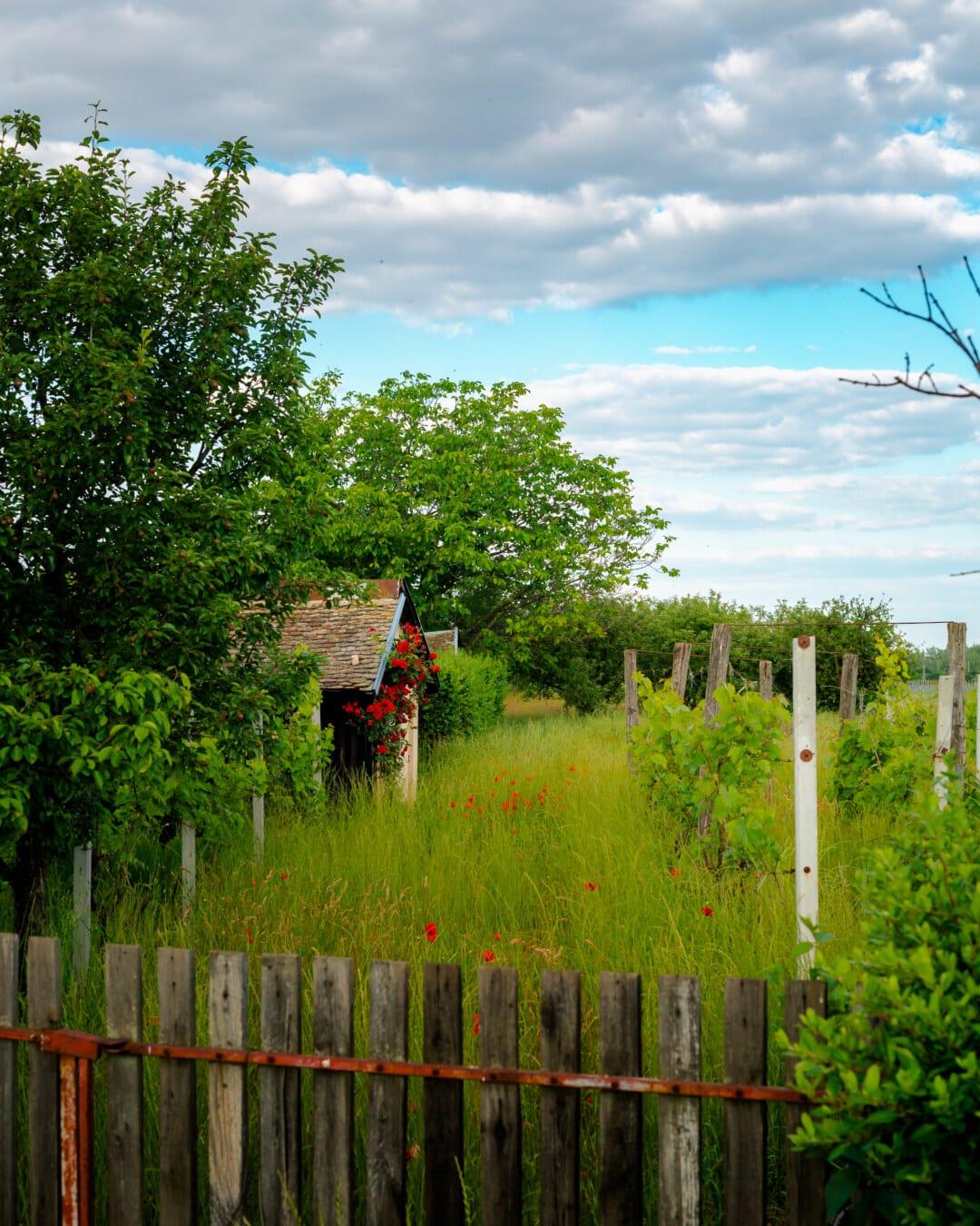 Bauernhaus, Bauernhof, verlassen, des ländlichen Raums, Obstgarten, Landschaft, Struktur, Lattenzaun, Zaun, Haus