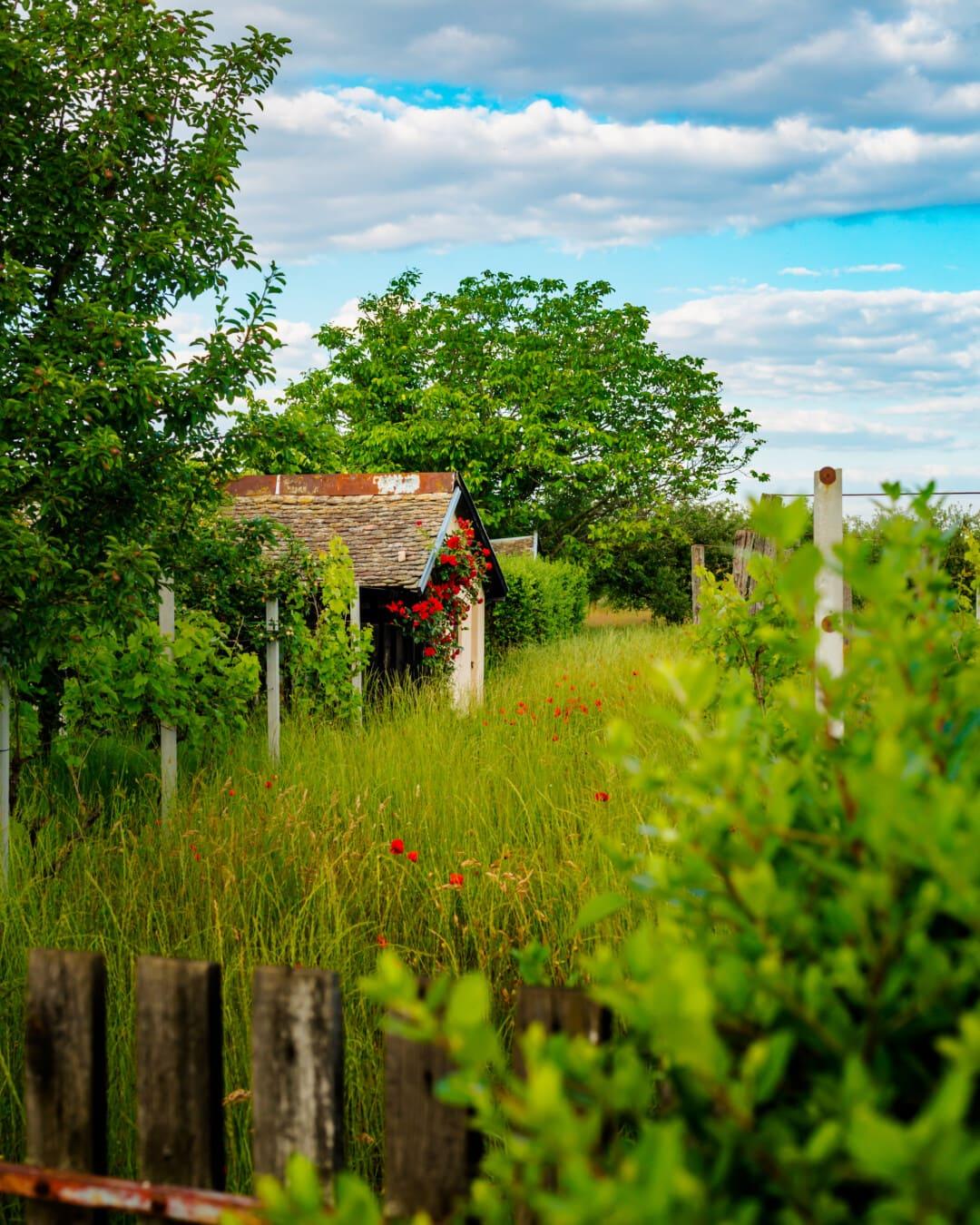 старый, фруктовый сад, отказаться, Коттедж, сельское хозяйство, виноградник, пейзаж, дерево, дерево, ферма