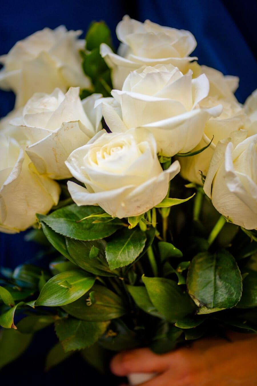 fleur blanche, bouquet, des roses, cadeau, Rose, feuille, pétale, fleur, arbuste, romance