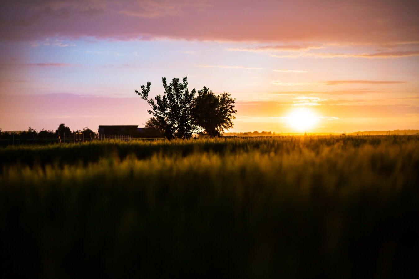 พระอาทิตย์ตก, wheatfield, จุดมืดดวงอาทิตย์, คู่บารมี, ซัน, แสงแดด, ฤดูร้อน, เงา, ย้อนแสง, ภูมิทัศน์