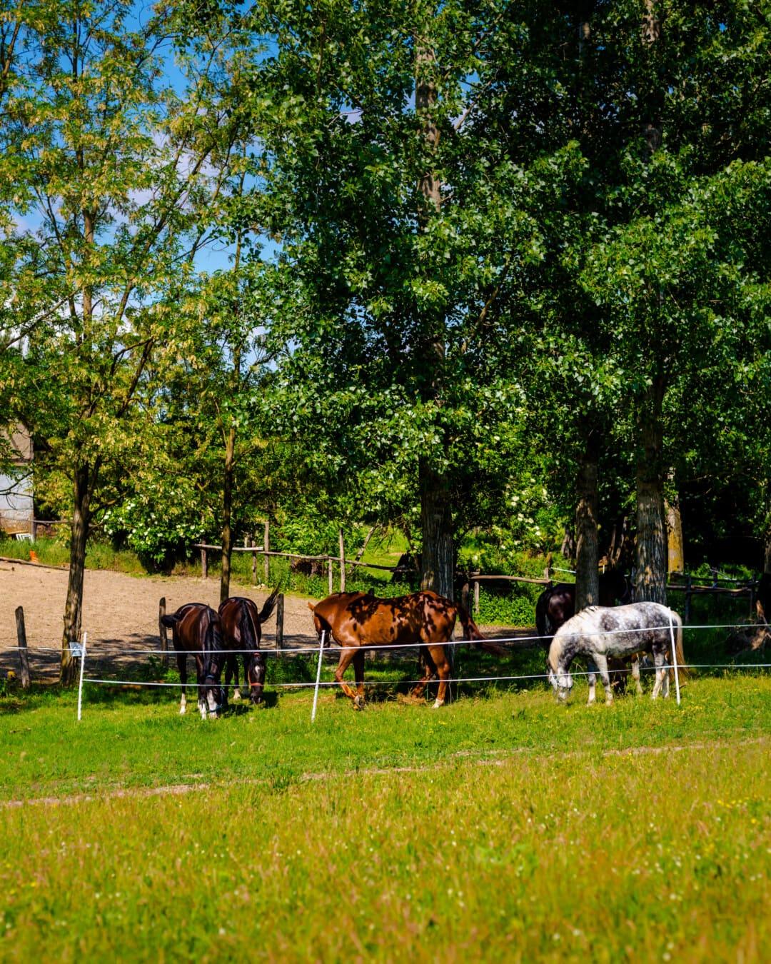 domestique, chevaux, bétail, les terres agricoles, Ranch, bovins, animaux, pâturage, arbre, rural