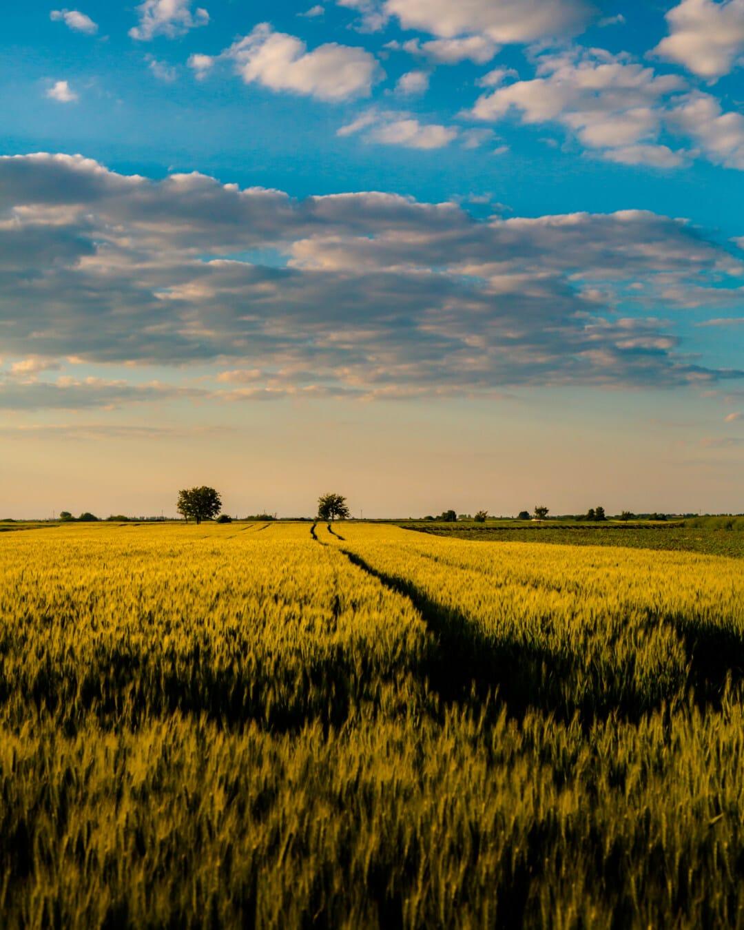 Landschaft, Weizenfeld, Landwirtschaft, Landschaft, Feld, Bauernhof, des ländlichen Raums, Raps, Ernte, Sonnenuntergang