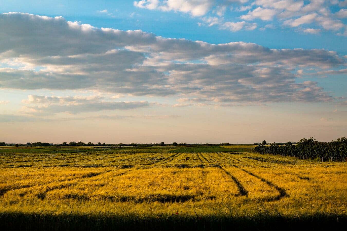 rye, field, sunset, grass, rural, farm, agriculture, meadow, landscape, sun