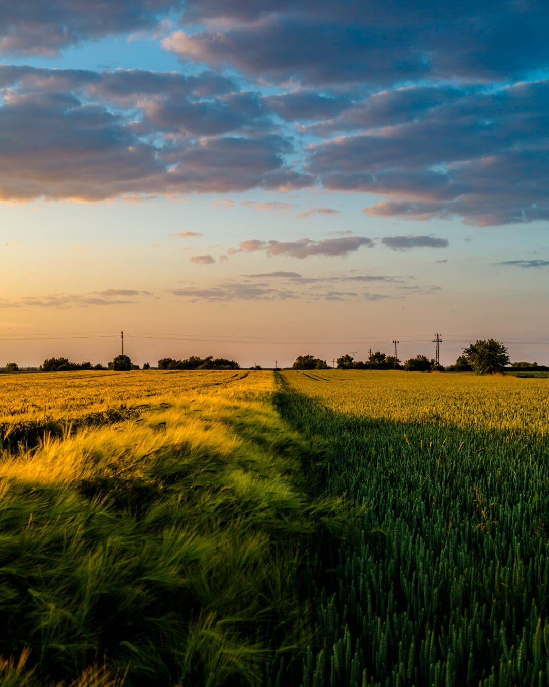 wheatfield, barley, idyllic, dusk, dark blue, clouds, seed, landscape, meadow, farm