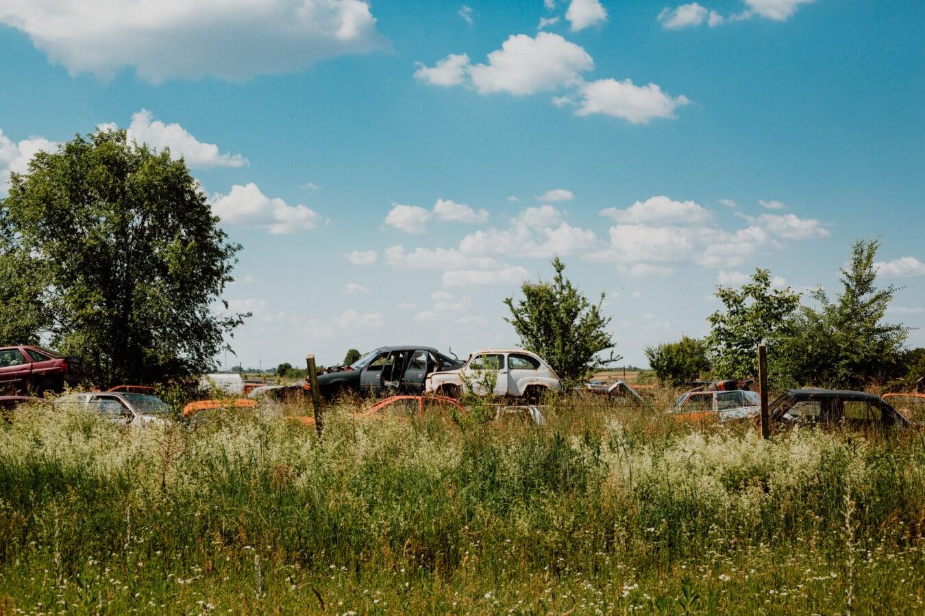 cars, wasteland, junkyard, garbage, grass, landscape, syrup, summer, rural, abandoned
