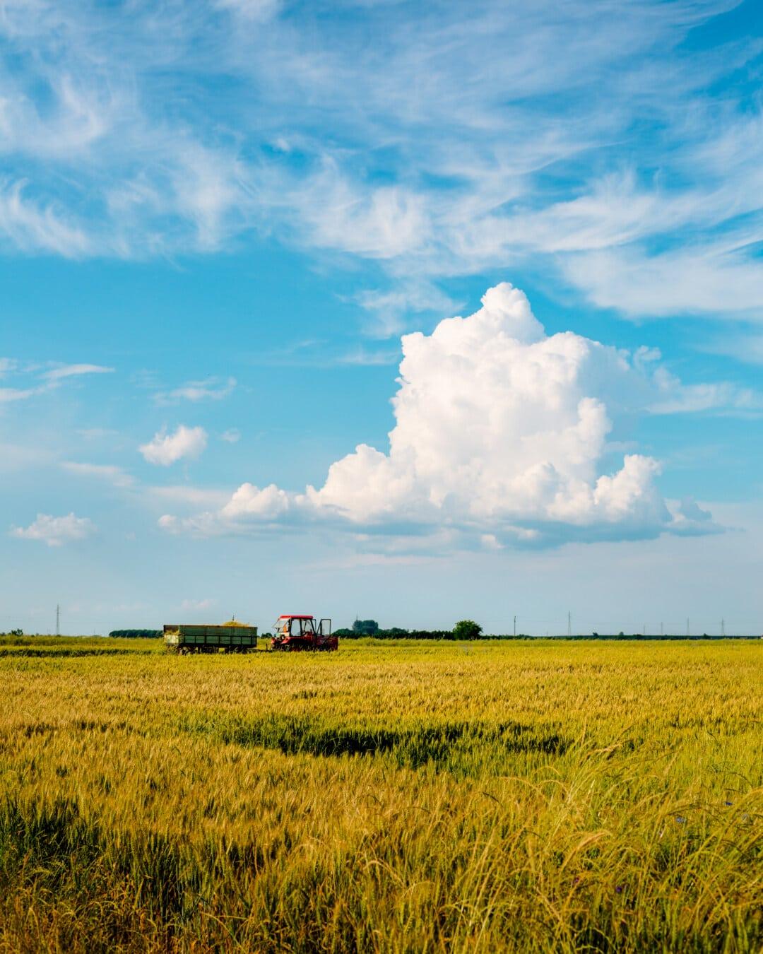 Trailer, traktor, pertanian, kerja lapangan, pemandangan, pedesaan, Brassica napus, pertanian, bidang, gandum
